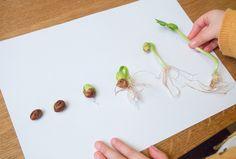 chronologie en vrai semis graines