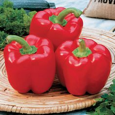 Karma Hybrid Pepper Seeds: Bright red pepper is 6 inches long and 4 inches wide, with a rectangular, 4-lobed, blocky shape.