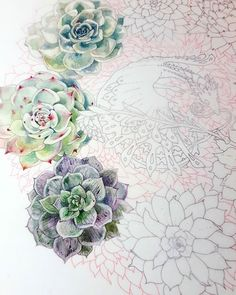 More progress on these #echeveria . Part of my #SucculentDragon #coloringbook project. http://ift.tt/2DRlvQn . #succulentgarden #succulove #succulents #plants #flower #floral #flowers #botanical #succulentaddict #dragon #fantastical #garden #plants