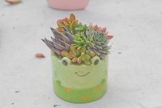 Succulent arrangement in adorable froggy by iDreamOfSucculents