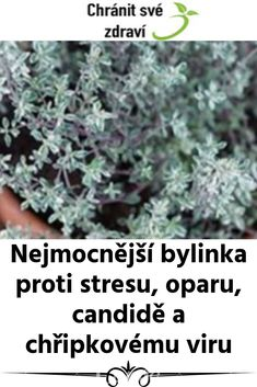 Tymián - nejmocnější bylinka proti stresu, oparu, candidě a chřipkovému viru. Health Advice, How To Dry Basil, Keto Recipes, Health Fitness, Food And Drink, Herbs For Health, Fitness, Health And Fitness