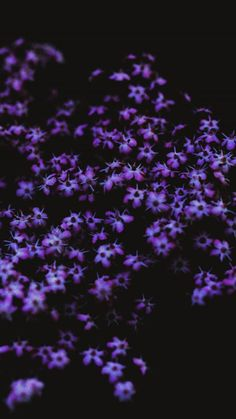 Screensaver for iPhone 7 of with Purple Flowers - HD Wallpapers Iphone Wallpaper Plants, Iphone Wallpaper Music, Simple Iphone Wallpaper, Iphone 7 Wallpapers, Iphone Wallpaper Tumblr Aesthetic, Apple Wallpaper, Wallpaper Ideas, Aesthetic Wallpapers, Dark Purple Aesthetic