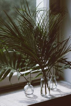 Foliage is the new floral. From huge Monstera leaves to fine leafy sprigs, foliage is effortlessly cool and long lasting. See how to style it at home. Ikebana, Deco Floral, Arte Floral, Indoor Garden, Indoor Plants, Cactus Plante, Home Decoracion, Miss Moss, Green Life