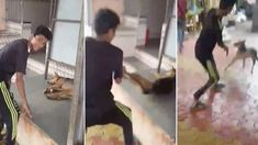 Punish Indian that hurled dog for fun while his friend laughed about it! | YouSignAnimals.org