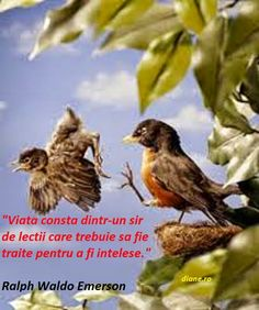Nature vs Nurture: How do baby birds learn how to fly? Pigeon, Nature Vs Nurture, Empty Nest Syndrome, Learn To Fly, Tough Love, Ralph Waldo Emerson, Beautiful Birds, Pretty Birds, Little Babies