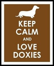 keep calm and love doxies
