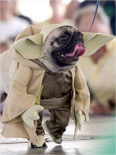 I'm master Yoda, haha