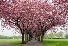 Camino floreado