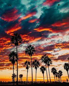 Sunset over Venice Beach, California Beautiful Photos of America Tumblr Wallpaper, Nature Wallpaper, Wallpaper Backgrounds, Tropical Wallpaper, Sunset Wallpaper, Gold Wallpaper, Tree Wallpaper, Beautiful World, Beautiful Places