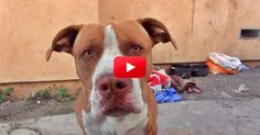 The Way This Abandoned Dog Comes Alive While Being Rescued Is So Heartwarming!   The Animal Rescue Site Blog