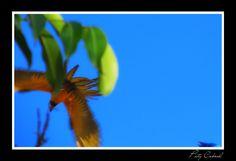 Única foto de uma arara em pleno vôo que consegui até agora.