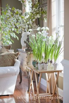 Plants, plants and more plants! Love the paperwhites and the beautiful tall branches in the background. Warm woods and fresh white + abundant sunlight = always good feng shui! More tips: http://FengShui.About.com
