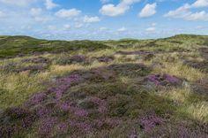 Fotobehang: Duinen van Texel