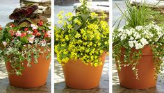 Lush container gardens are easy to create with this simple plant formula: A thriller plant + a filler plant + a spiller plant = a killer container garden.