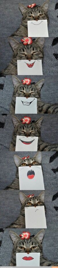 This is why I want a cat