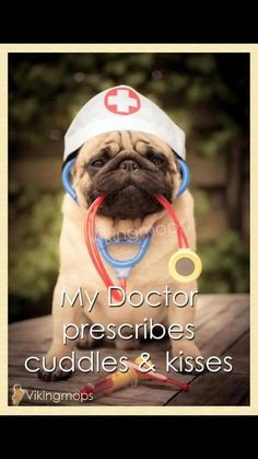 Docteur...... <3 ******* #pug