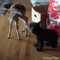 chen u Rehkitz kommen sich näher You are in the right place about Cutest Baby Animals videos Here Cute Little Animals, Cute Funny Animals, Cute Dogs, Cute Dog Stuff, Super Cute Animals, Funny Cats And Dogs, Funny Stuff, Cute Creatures, Beautiful Creatures