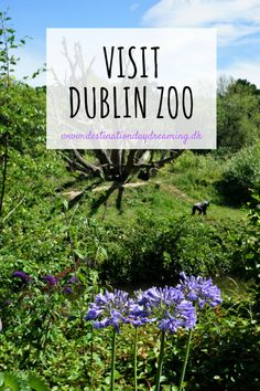 Dublin Zoo Ireland - worth a visit! Read more on the blog 👉🏼 destinationdaydreaming.dk