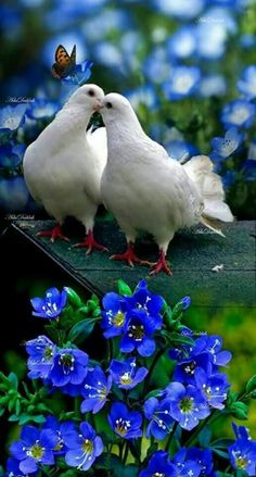 Nadire Atas on Love Birds Pretty Birds, Beautiful Birds, Animals Beautiful, Cute Animals, Exotic Birds, Colorful Birds, Colorful Animals, Pictures Images, Nature Pictures