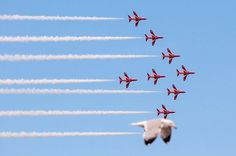 A seagull takes the place of a Red Arrow Hawk at the Llandudno Air Show.