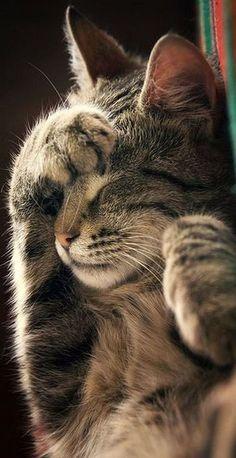 Do Not Disturb ! #by ZoranPhoto on DeviantArt #cat cats kitty kitten animal pet fur fluffy cute