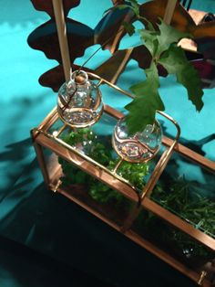 OUR CLIENTS WORK, Sebastian Hedengrahn a student at Carl Malmsten Furniture Studies made an elegant  greenhouse with our knob DOT 18 M in brass. http://bb-sweden.se/?lang=en