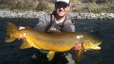 Matt Heron Reels in a Gigantic Brown Trout - Lake Tahoe Trout Fishing Tips, Fishing Videos, Walleye Fishing, Kayak Fishing, Fishing Tricks, Fishing Rods, Carp Fishing, Fishing Tackle, Fishing Stuff