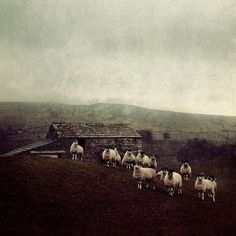 Sheep ont hills nature hils English by NiceLittlePhotos on Etsy, £10.00