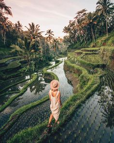 "71.5k Likes, 353 Comments - Earth (@earth) on Instagram: ""Wandering through the rice fields of Bali. cc: @alexgoldman"""