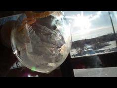 肥皂泡泡結冰過程,超酷~