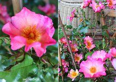 seidenfein 's Dekoblog Dekoblog, Plants, Country Living, Silk, Handarbeit, Flowers, Flora, Plant