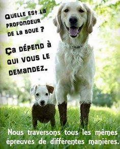Animals And Pets, Funny Animals, Cute Animals, Funny Art, Funny Jokes, Respect Life, Good Humor, Jokes Quotes, Positive Attitude