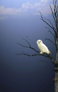 Night #Owl Mist from guardians books!