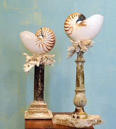 Deyrolle in Paris Decorative Objects, Decorative Accessories, Seashell Display, Shell Decorations, Curiosity Killed The Cat, Dream Beach Houses, Seashell Crafts, Shell Art, Nautilus