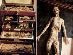 Bodies Of Strange Creatures Were Found In The Basement Of An Old House In London