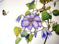 Randy Hinz - watercolor, pen & ink - Exquisite botanicals!!