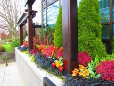 Fire pit area, exotic flowers. Mix of fiery reds, oranges, dee purple, shades of green- tall bushes for privacy