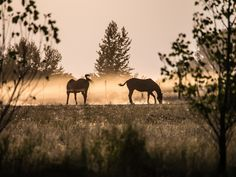 horses in pasture, during sunset in ririe idaho