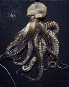 Octopus- polpo