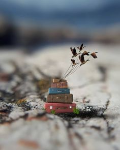 Pecunia Tutorial and Ideas Miniature Photography, Cute Photography, Creative Photography, Beautiful Nature Wallpaper, Love Wallpaper, Cool Pictures, Cool Photos, Beautiful Pictures, Honfleur
