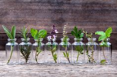 6 Best Vegetables To Grow In Water Watercress, water chestnut, wasabi, and lotus are some of the food plants that naturally grow in water. But many terrestrial vegetables can adapt to growing in water. Some, like leafy greens like lettuce and spinach, do extremely well. They seem to be happier than their counterparts growing in the ground because they get a continuous supply of water…   [read more]