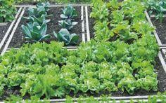 Ημερολόγιο σποράς και φυτέματος λαχανικών και εποχή συγκομιδής τους ανά μήνα.
