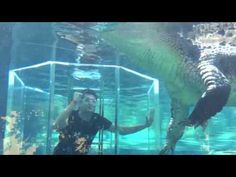 Cage of Death |Crocosaurus Cove