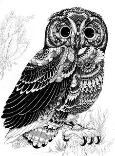 Animal illustrations and shirt designs