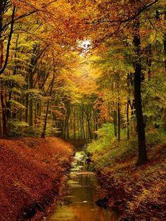Autumn's sweet embrace