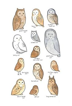 A whimsically illustrated chart of owls found in North America. High quality print Created from my ink and watercolor illustration Signed and dated in pencil Protecting in acid-free clear sleeve Choos