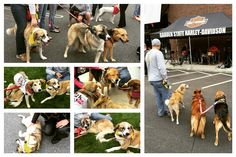 The #puppyrescuemission #ride was #PAWESOME!! Got to  meet my fans and supporters!! #bellyrubsplease #prm #gardenstate #harleydavidson #jersey #pawpump #bosnianstreetdog  #bosniaandherzegovina #savebosnianstrays #bih #sarajevobosnia #supportourtroops #puppiessavingsoldiers