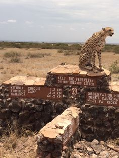 No rushing to work late this morning in Amboseli - there's a new traffic warden on the prowl!