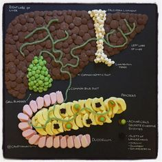 Candy Anatomy - The Liver - by Mike McCormick