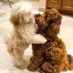 #puppylove @remi_the_teddy thank you for the #lacyandpaws tag... #lacyandpaws